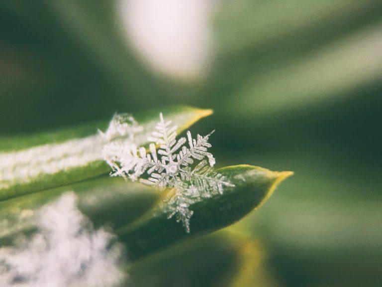 Affrontare la stagione fredda ecologicamente